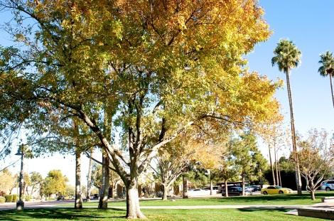 treepark3